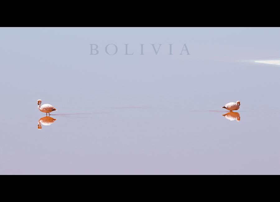 flamingos02
