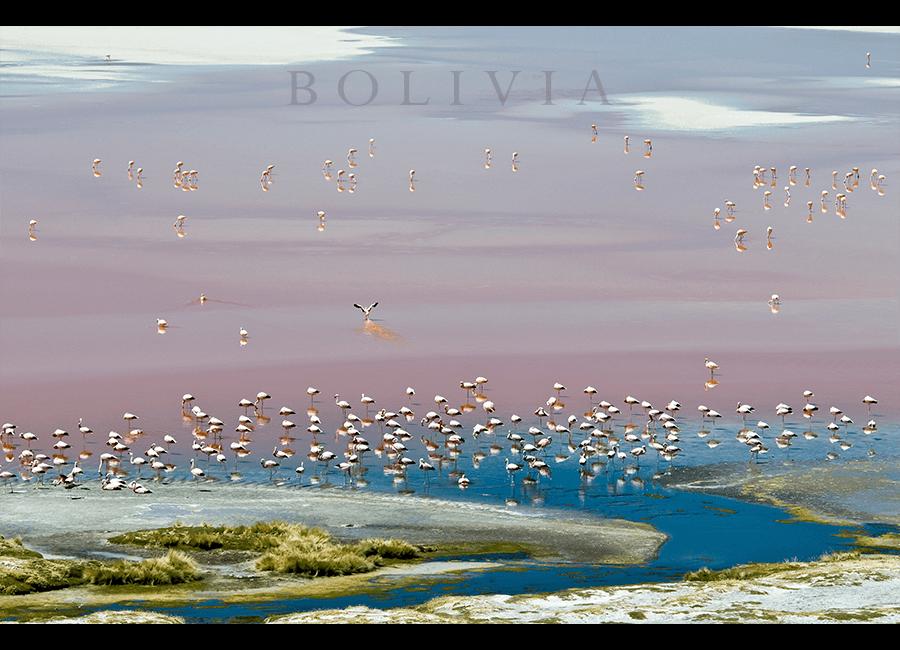 flamingos03