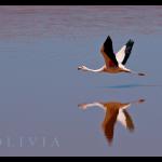 flamingos07