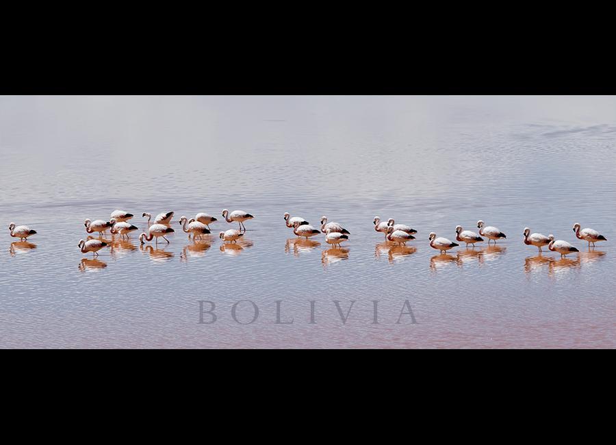 flamingos14
